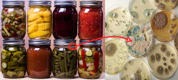 Black Mold In Canned Food