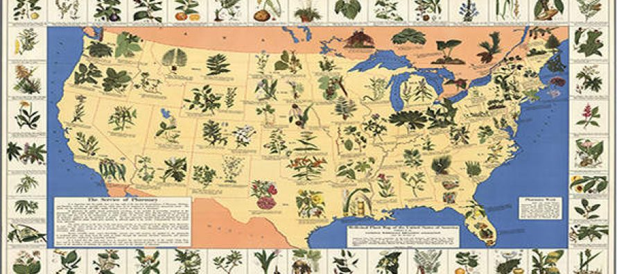 A Medicinal Plant MAP That Should Be in Your Survival Kit