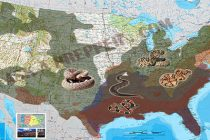 The Most Venomous Snakes in The US