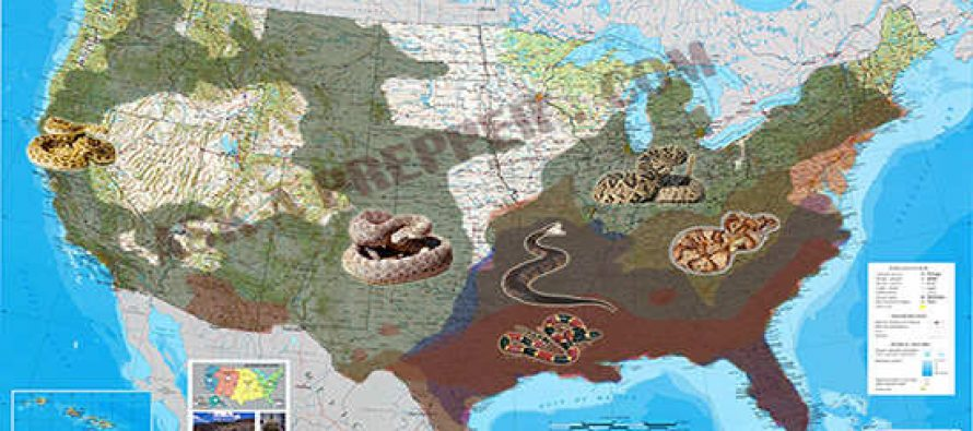 The Most Venomous Snakes in The US Ask a Prepper