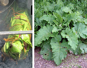 burdock ash cooking