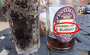 how to make dandelion and burdock drink