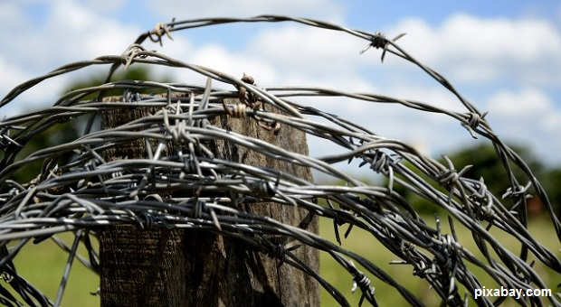 barbed-wire1