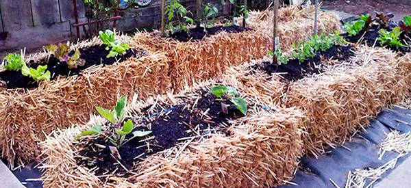 gardening for the future hay and straw bale gardening ask a prepper