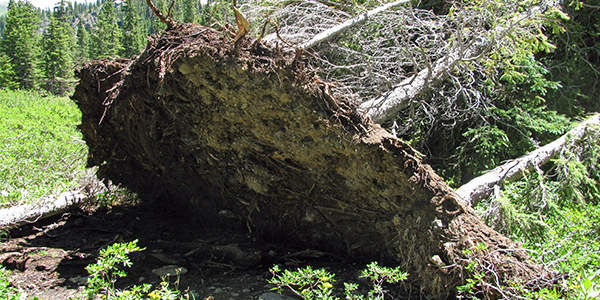 Uprooted-trees