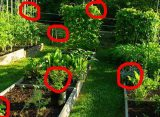 Top 10 Foods to Grow for Survival
