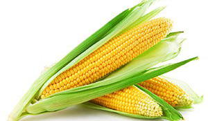 corn-survival food