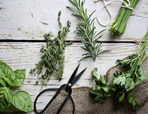 herbs-survival food