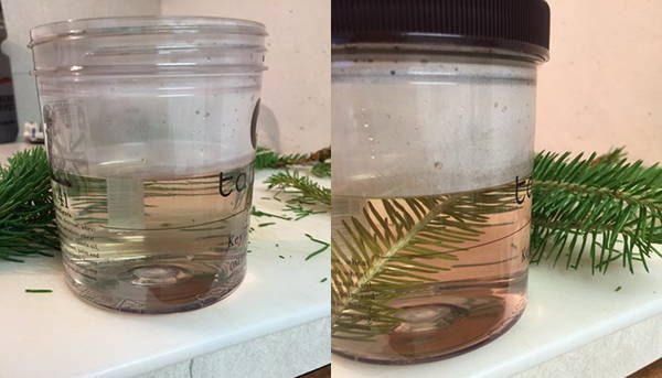 how to make pine syrup step 4