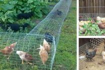 DIY Chicken Tunnel (Step-by-Step Guide)