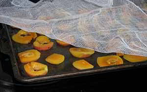 drying peaches