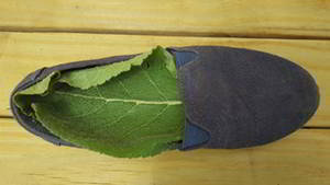 Shoe Insoles mullein