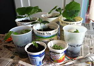 reuse yougurt cups