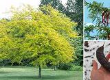 10 Trees Every Survivalist Should Know and Why