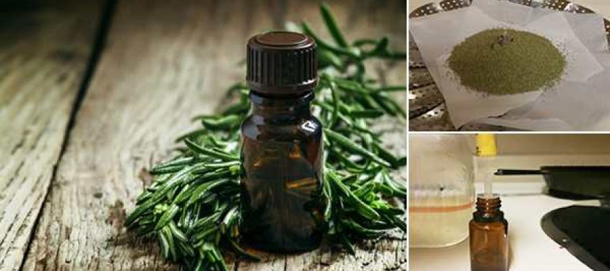 How To Make Tea Tree Oil To Treat Infections