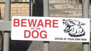 Beware of the Dog How to Avoid Being Targeted by Looters During a Period of Civil Unrest