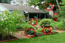 Identifying Your Backyard Pharmacy
