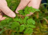 Edibility Test: Find Out Which Backyard Weeds are Edible