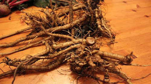 12 Wild Medicinal Plants You Must Harvest This Fall poke root