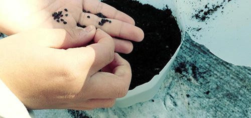 Winter Sowing Technique That Guarantees The Best Crops