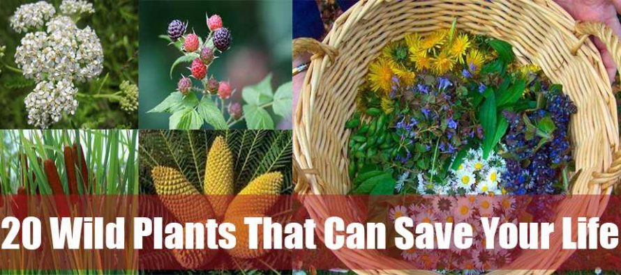 20 Wild Plants That Can Save Your Life