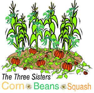 3 sisters garden SHTF