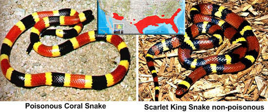 coral snake kings snake identification and area