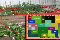 An Awesome 72 Square-Feet SHTF Medicinal Garden Plan