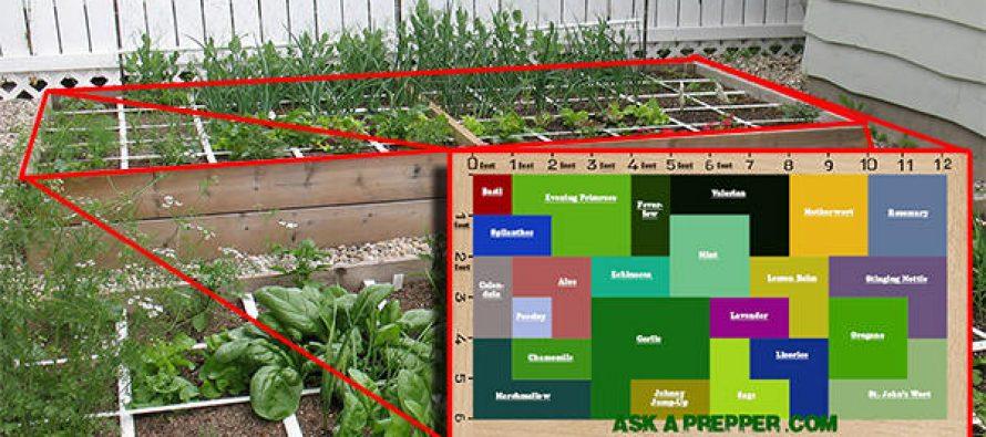 An Awesome 72 Square-Feet SHTF Medicinal Garden Plan