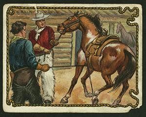 cowboy survival 9