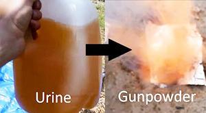 urine gunpowder