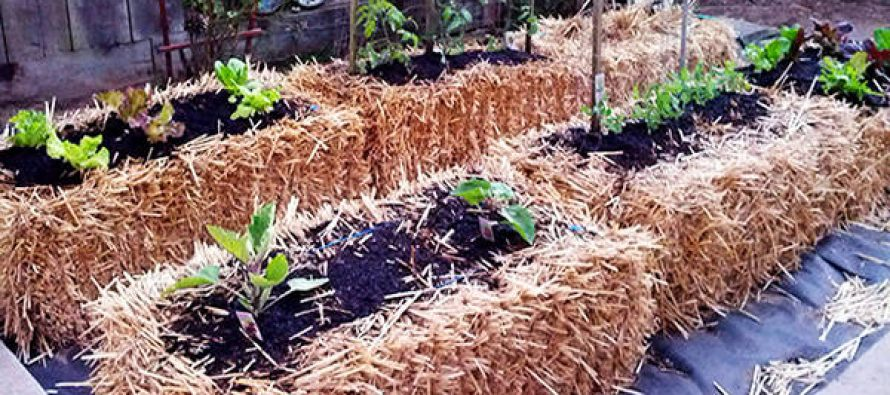 Gardening For The Future – Hay and Straw Bale Gardening