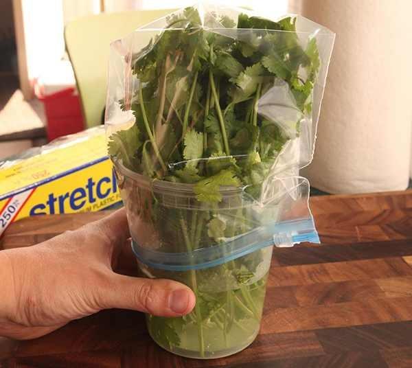 herb storage best method
