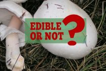 Edible and Non-edible Mushrooms you Find in Forests