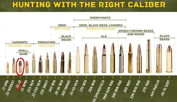 Hunting Bullets .22