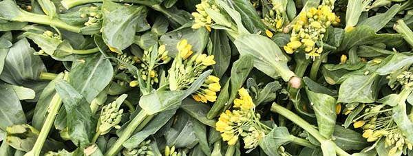 Pok Choy tasty flowers