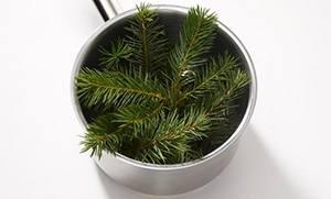 Pine Sirup