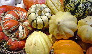 Squashes-survival-food