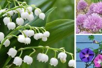 10 Beautiful Plants That Are Secretly Killing Your Garden