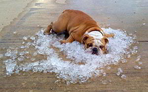 Cooling-down-living without AC