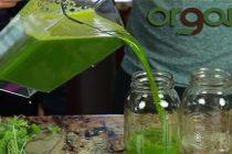 Organifi – The Ultimate Prepper Juice to Stockpile