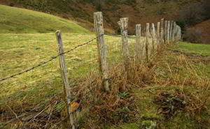 woven wire homesteading fence