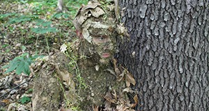 The best way to conceal yourself is with camouflage clothing. Patterns that mimic leaves or tree bark are popular with some hunters, but military patterns ...