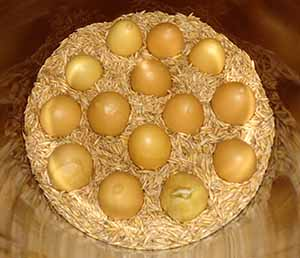 Eggs coated in bees wax stored in a crock filled with oats