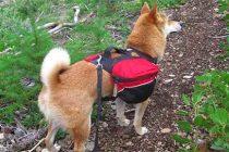 14 Dog Breeds for Preppers