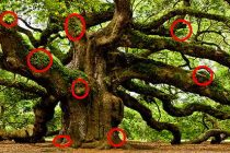 How to Consume Oak – Nature's Powerhouse