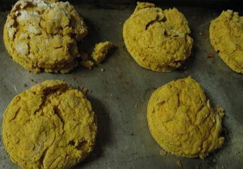 cattail biscuits
