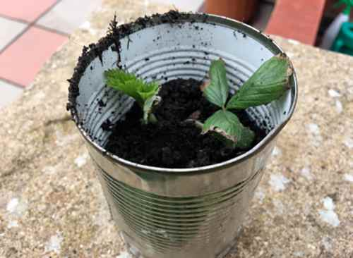 plant pot tin can