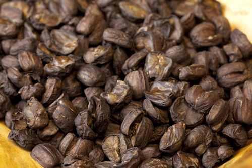 roasted acorns