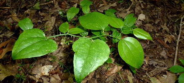 5. greenbriar